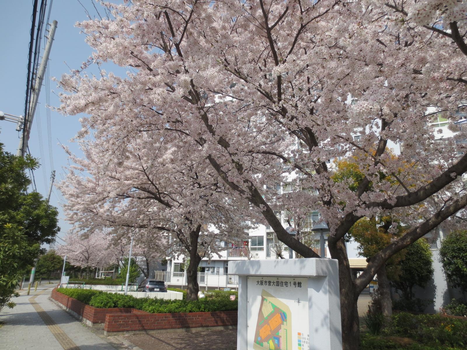 浪速区:大阪市営大国住宅1号館前